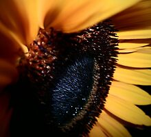 You are my Sunflower by shuttertime