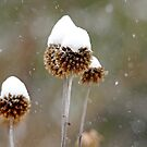Snow Hats by Debbie Oppermann