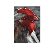 Red Rooster color select Art Board