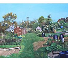 Sheds on allotments at Southampton Photographic Print
