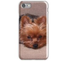 Yorkie Pout Face iPhone Case/Skin