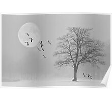 Snow Geese In The Snow Poster