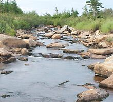photography of a stream in nova scotia by Vujovich44