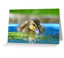Daffy Duck Loving Life - NZ Greeting Card