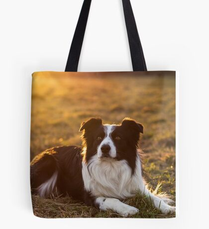 border collie at sunset Tote Bag