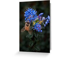 Bee on Ceanothus Greeting Card