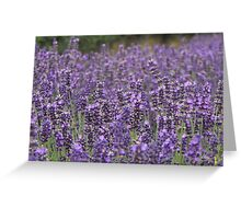 Lavender Alive Greeting Card