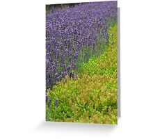Lovely Lavender Greeting Card