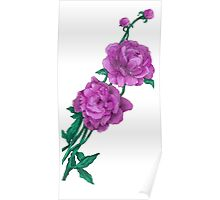 Delicate Beauty (peony) Poster