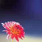 Sunny Day Flower by Carrie Bonham