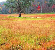 AUTUMN MEADOW,CADES COVE by Chuck Wickham