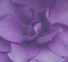 Purple Flower  by Candy Gemmill