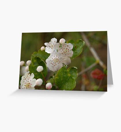 Furry Flowers Greeting Card