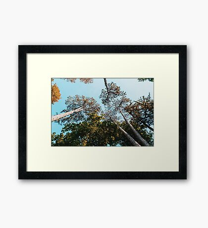 Green Forest Trees On Blue Sky Background Framed Print