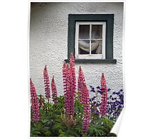 Lupins Beneath a Rustic Window Poster