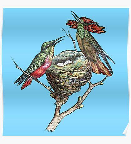 Hummingbirds on Nest  Poster