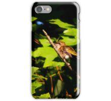 Ruby Throated Hummingbird iPhone Case/Skin