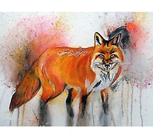 Little Fox Photographic Print