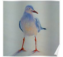Sunset Seagull. Elizabeth Moore Golding 2011 Poster