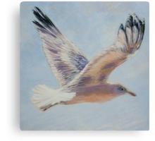 Seagull in flight. Elizabeth Moore Golding 2010  Canvas Print
