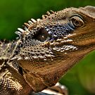 Water Dragon, Lane Cove National Park, Sydney by Erik Schlogl