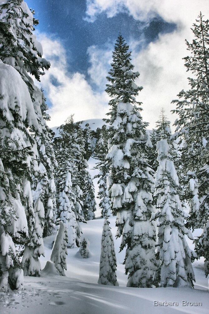 Snow Laden by Barbara  Brown