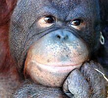Philosophy Thinking Orang-Utan Monkey by brightsunlight