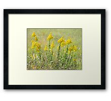 Guess What's Blooming? GOLDENROD! Framed Print