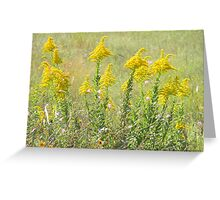 Guess What's Blooming? GOLDENROD! Greeting Card