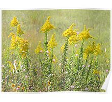Guess What's Blooming? GOLDENROD! Poster