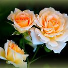 Apricot Dream by Rocksygal52
