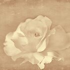 Sepia Rose by Elaine Teague