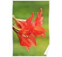 Red Flower Romance - Vibrant Beauty Poster
