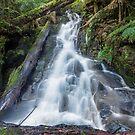 Upper Splitter Falls by Travis Easton