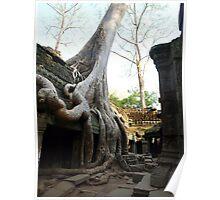 Silk Cotton Tree - Temple Ta Prohm, Cambodia Poster
