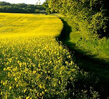 Field of yellow ~ Landscape by Karen  Betts