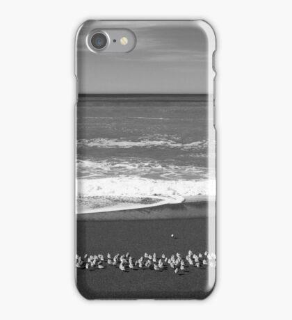 Western Snowy Plovers at Moonstone Beach, CA iPhone Case/Skin