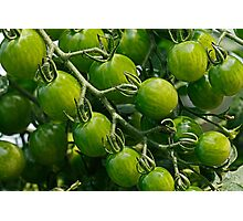 green tomatoes Photographic Print