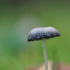 Little mushroom by Heather Thorsen