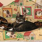 Mishu Takes Over Patrick's Bed by Dennis Melling