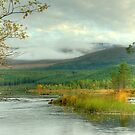 The Luineag at Loch Morlich by Jamie  Green