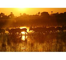 Orange dawn in the okavongo delta Photographic Print