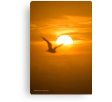 Seagull Passing The Sun - For Dad | Wantagh, New York Canvas Print