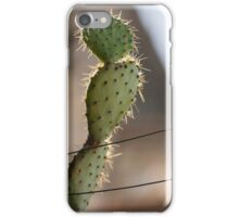 succulent plant in the vase iPhone Case/Skin
