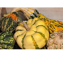a beautiful pumpkin Photographic Print
