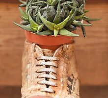 succulent plant in the vase by spetenfia