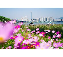 Cyclists and Cosmos by the Han River, Seoul Photographic Print