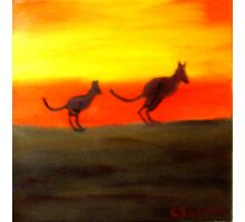Roos @ Sunset, Australia.  Photographic Print