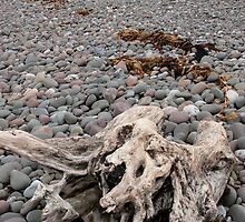 driftwood on the pebbled beach by morrbyte