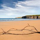 driftwood on the beach at Ballybunion by morrbyte